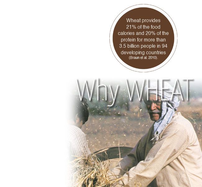 why_wheat