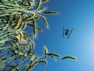 Wheat Remote Sensing-flip